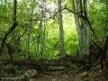 В Крымском лесу