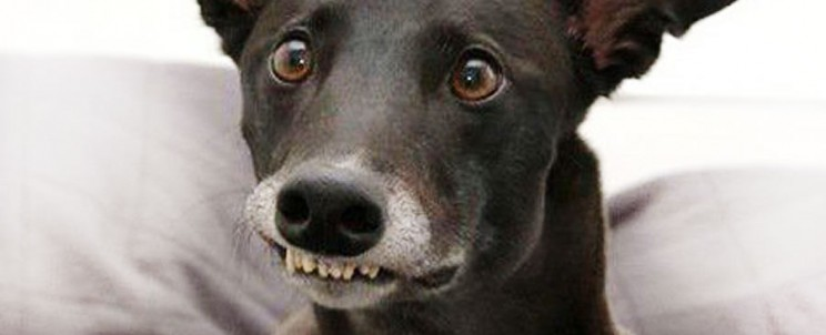 Улыбка собаки